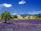 Provence, levandulové lány u Vaucluse