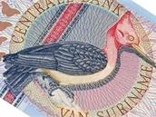 Detail surinamsk� bankovky