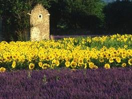 Slunečnico-levandulové zátiší z Provence