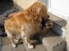 Do školky se vybírají psi, kteří nejsou agresivní a kteří si spolu budou bez