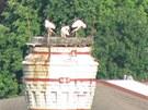 Webkamerou zachycen� ��pi na kom�n� pivovaru v Trutnov�