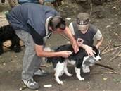 Očkování psů bezdomovců v lesích v katastru obvodu Ostrava-Jih.