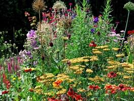 Žluto-červeno-oranžová kombinace květin na západní části zahrady