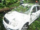 Bouřka v Libereckém kraji povalila strom na auta.