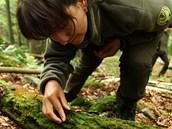 Hledání šikoušku zeleného v Krkonoších