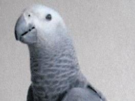 Papouška v Ondříčkově filmu Ztraceni v Mnichově baví citovat zesnulého