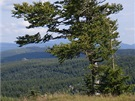 Cestou na Předěl je tento strom fotogenický kdykoliv v roce. I v zimě.