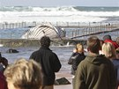 Velryby uváznuté na australském pob�e�í v�dy vyvolávají pozornost mno�ství...