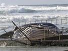 Místní ú�ady doufají, �e by uhynulou velrybu mohl vyzvednout a odplavit p�í�tí...