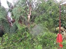 Ničivá víkendová bouřka v Bavorově porážela statné stromy.