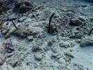 Další údajné zbytky britské pirátské lodi Port-au-Prince.