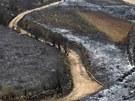 P�ed plameny u� uteklo 4 700 lidí. Zu�ící �ivel na ostrov� Tenerife p�eru�il...