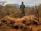 DĚSIVÁ ZKÁZA. Kdo tohle udělal? jako by se ptal Jao Ming při pohledu na slona zabitého pytláky v keňské rezervaci Samburu.