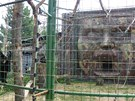 Jeden z pavilon� opic v Zoo Chleby