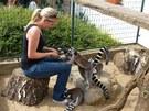 K lemurům, kteří se nechají krmit kousky piškotu,   pouštějí v Chlebech i děti....