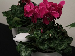 Koubachi - váš strážce květin