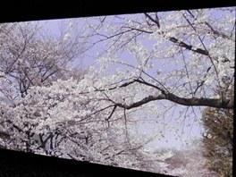 Prototyp 145palcové plazmové obrazovky s rozlišením 8K. V originále je to přece