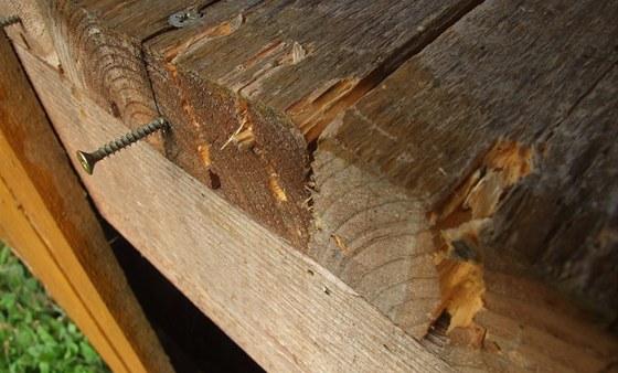 Na dřevě se našly typické stopy medvědích drápů.