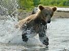 """""""Kamčatka nabízí takovou koncentraci medvědů, že brzy přestanete počítat"""