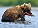 U Kurilského jezera najdou medvědi dostatek potravy.