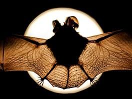 Evropská noc pro netopýry v Hradci Králové.