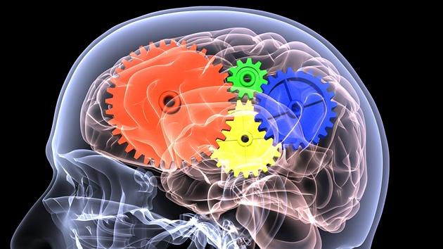 mozek (ilustra�ní foto)