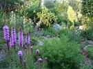 Vlevo v popředí šuškarda (Liatris spicata)