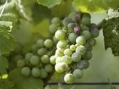 Domácí hroznové víno