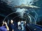 Už před rekonstrukcí bylo sydneyské Sea Life Aquarium unikátní.