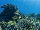 Apo Islands, Filipíny