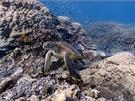 Heron Island, Velk� bari�rov� �tes