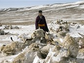 Dobytek je �st�edn�m bodem �ivota mongolsk�ch pastevc�. Kdy� o n�j p�ijdou,