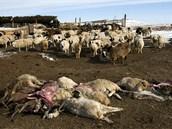 Pastevci uhynul� zv��ata mohli poh��t a� na ja�e, kdy� p�da rozmrzla,