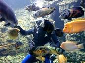 Sladkovodní akvárium v Hradci Králové
