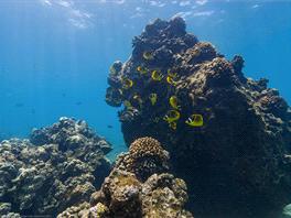 Hanuama Bay, Oahu, Havaj