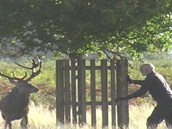 Jelen chtěl v parku zaútočit na muže