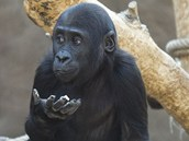 Kiburi si pochutnává na vitamínové kouli.