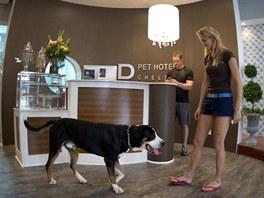 Recepce luxusního psího hotelu na Manhattanu
