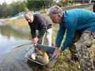 Mezi vysazenými rybami v Luhačovické přehradě jasně dominují kapři.