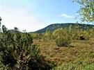 Všude jsou husté a zdravé lesy.