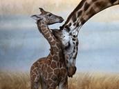 Příroda a životní prostředí, čestné uznání: MARTIN MATĚJKA, volný fotograf:...