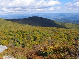 Bukové lesy na podzim