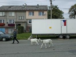 V Arnoltic�ch na Olomoucku se volilo v maringotce (12. ��jna 2012, Arnoltice).