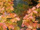 I když je slunce schováno za závojem mlhy, září Kokotsko podzimní paletou