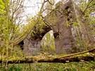 Zbytek železného mostu není přes stromy a keře téměř ani vidět. Na začátku