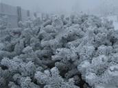 Začátek zimy na beskydské Lysé hoře. (28. října 2012)