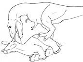 Paleontologov� se pokusili zrekonstruovat postup, jak�m se T. rex mohl dostat k