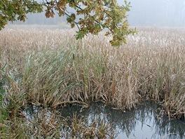 Horní kokotský rybník, druhý zachovaný pozůstatek někdejší soustavy čtyř