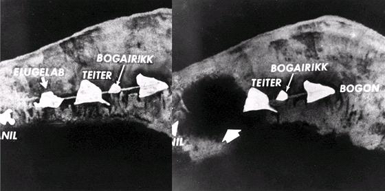 Atol Eniwetok před (vlevo) a po výbuchu Ivy Mike. Na nový kráter vás asi
