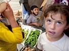 Vládní speciál přivezl do jordánského Ammánu humanitární pomoc určenou syrským uprchlíkům. V uprchlickém táboře v Zátarí nyní žije přes 20 tisíc uprchlíků. Od hlavního města je vzdálen cca 60 kilometrů (6. listopadu 2012, Jordánsko).